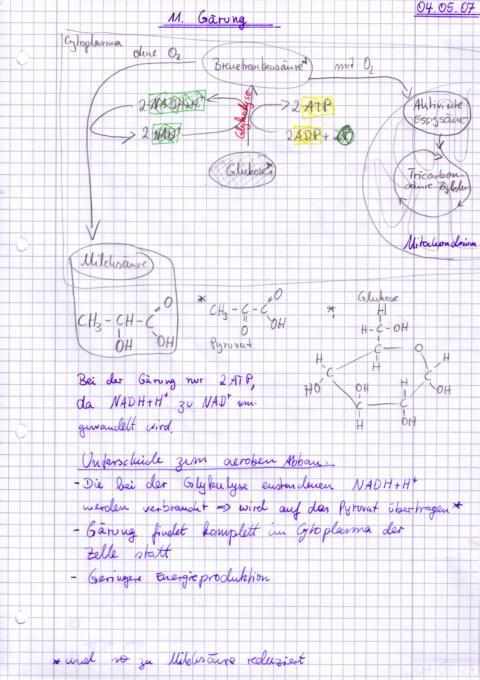 Erstellen von biologischen Zeichnungen am PC